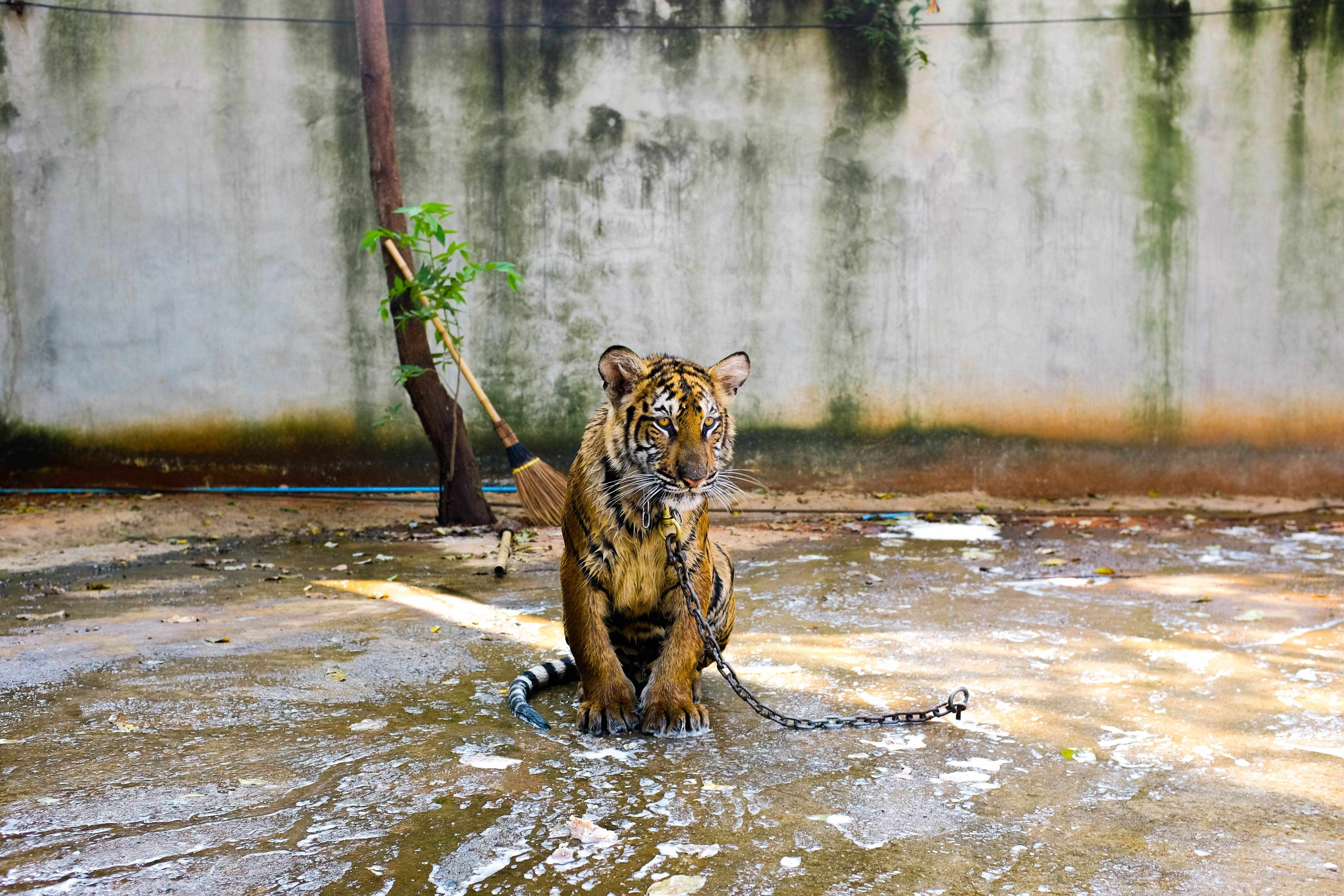 should animals be kept in zoos pros and cons
